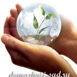 10 комнатных растений, очищающих воздух в доме