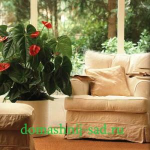 каталог комнатных цветов